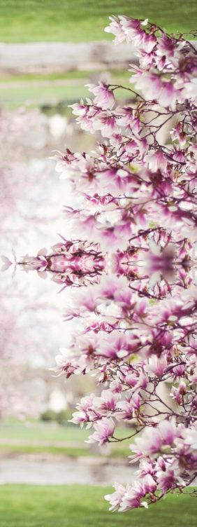 dzien kwiaty ojca2